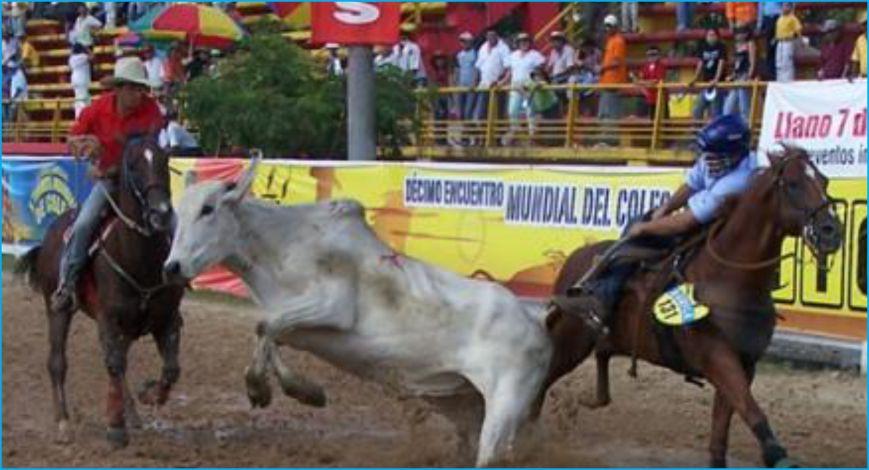 Festival de Coleo Acacias